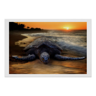 Sea Turtle at Sunset Poster