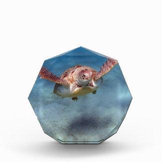 sea turtle acrylic award