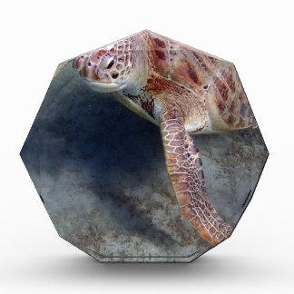sea turtle awards
