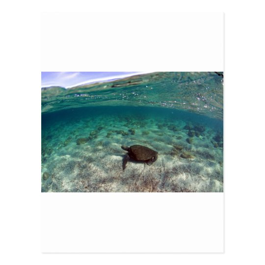 Sea turtle beautiful lagoon Galapagos Islands Postcard