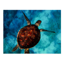 Sea Turtle Beauty Postcard