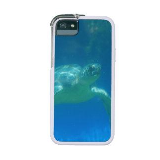 Sea Turtle iPhone 5 Covers