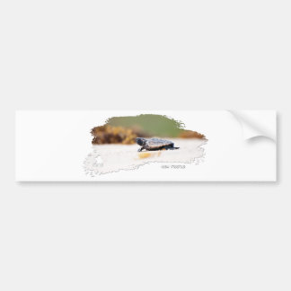 Sea Turtle Hatchling Bumper Stickers