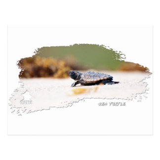 Sea Turtle Hatchling Postcard