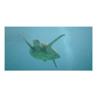 Sea Turtle in Natural Habitat Card