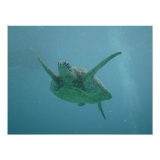 Sea Turtle in Natural Habitat Poster