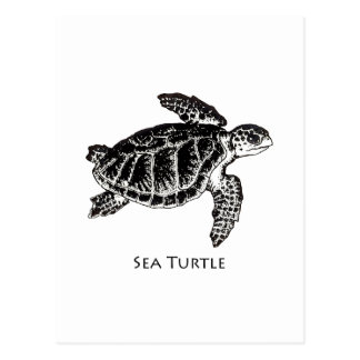 Sea Turtle (Kemp's Ridley) Postcard
