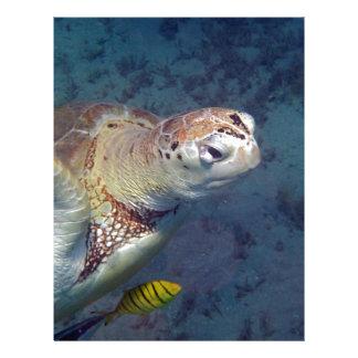 sea turtle letterhead
