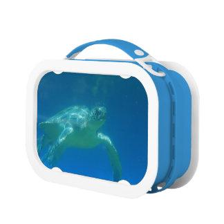 Sea Turtle Lunchbox