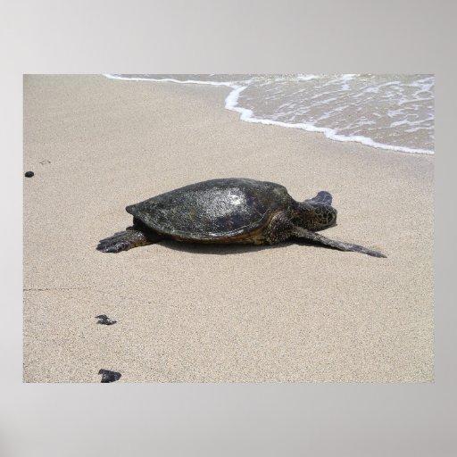 Sea Turtle on Beach Poster