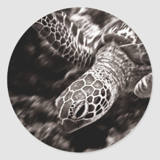 Sea Turtle on the Great Barrier Reef, Australia Classic Round Sticker