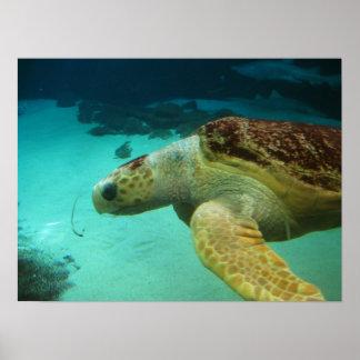 Sea Turtle Photo Poster