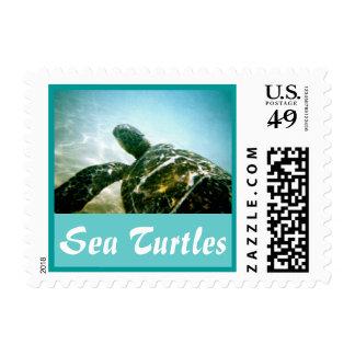 Sea Turtle Postage Stamp