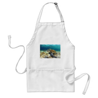 Sea turtle relaxing underwater in tropical lagoon adult apron