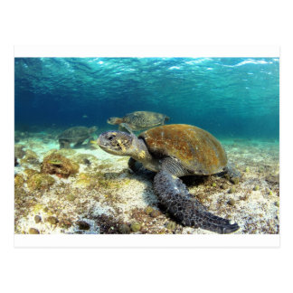 Sea turtle relaxing underwater in tropical lagoon post cards