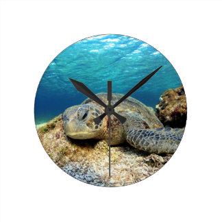 Sea turtle relaxing underwater in tropical ocean round clock