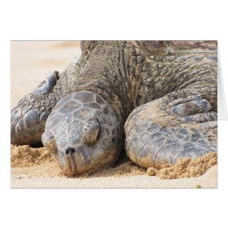 Sea Turtle Repose Card