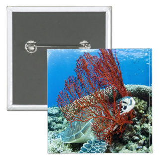 Sea turtle resting underwater 2 button