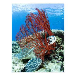 Sea turtle resting underwater 2 postcard