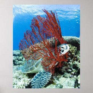 Sea turtle resting underwater 2 poster