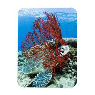 Sea turtle resting underwater 2 rectangular photo magnet