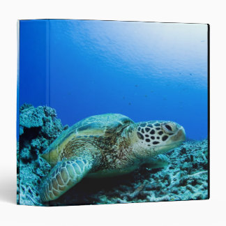 Sea turtle resting underwater binder