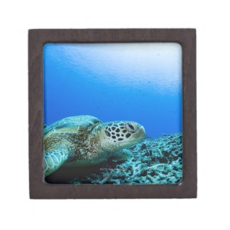 Sea turtle resting underwater keepsake box