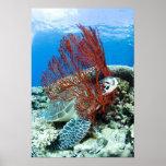Sea turtle resting underwater posters