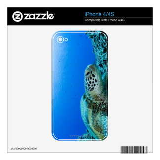 Sea turtle resting underwater skins for the iPhone 4S