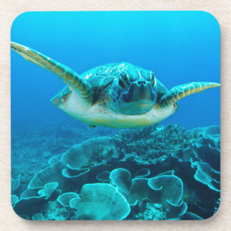 Sea Turtle Set of 6 Coasters