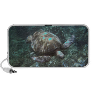 Sea turtle speaker
