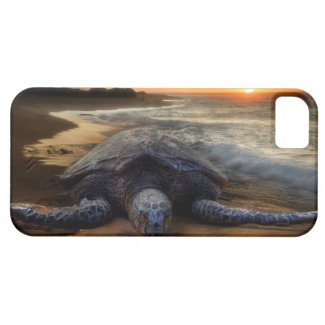 Sea Turtle Sunset iPhone 5 Cases