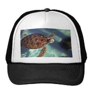 Sea turtle surfaces mesh hat