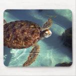 Sea turtle surfaces mouse pad
