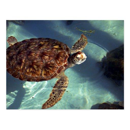 Sea turtle surfaces postcard