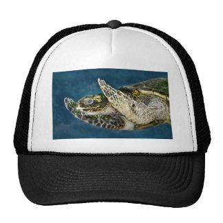 Sea Turtle Surprise Mesh Hat