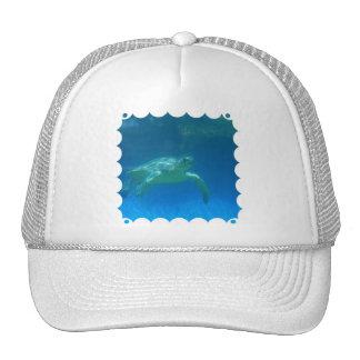 Sea Turtle Swim Baseball Hat