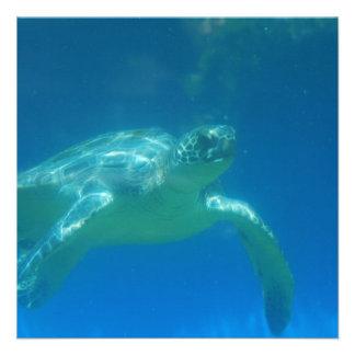 Sea Turtle Swim  Invitations