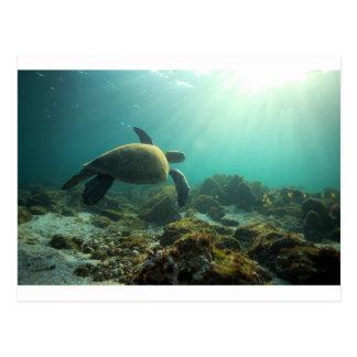 Sea turtle swimming underwater dreamy ocean postcard