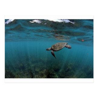 Sea turtle swimming underwater Galapagos Islands Postcard