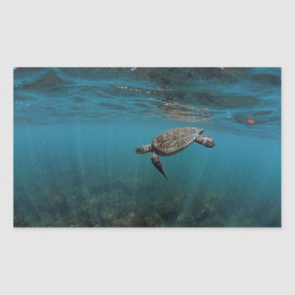 Sea turtle swimming underwater Galapagos Islands Sticker