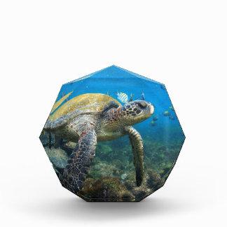 Sea turtle swimming underwater Galapagos paradise Acrylic Award
