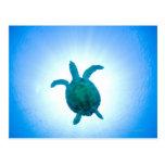 Sea turtle swimming underwater post cards