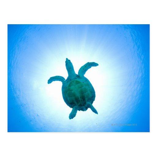 Sea turtle swimming underwater postcard