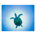 Sea turtle swimming underwater poster