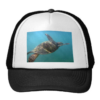 Sea Turtle swims in the water Mesh Hats
