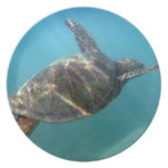 Sea Turtle swims in the water Plate