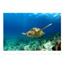 Sea turtle underwater postcard