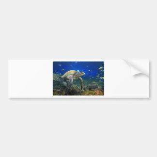 Sea turtle underwater tropical Pacific ocean Bumper Sticker