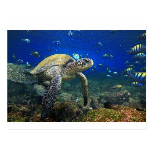 Sea turtle underwater tropical Pacific ocean Postcard